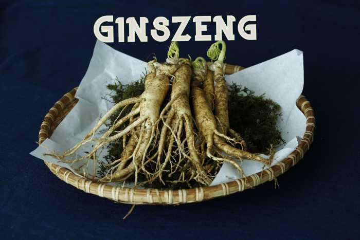Ginszeng