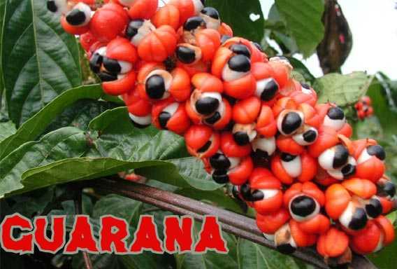 A guarana jobb mint a kávé?