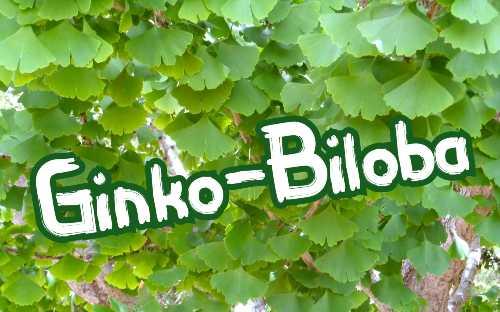 Ginko Biloba