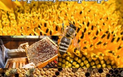 Propolisz, méhpempő, virágpor
