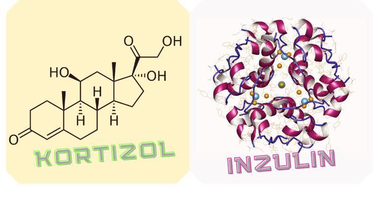 Inzulin és kortizol