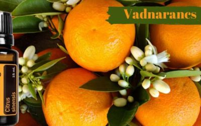 Vadnarancs – wild orange